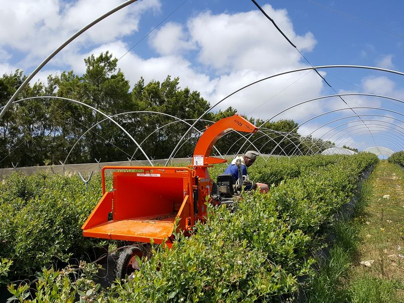 TOMCAT Wood Chippers in action on Blueberry Farm in South Africa (1)